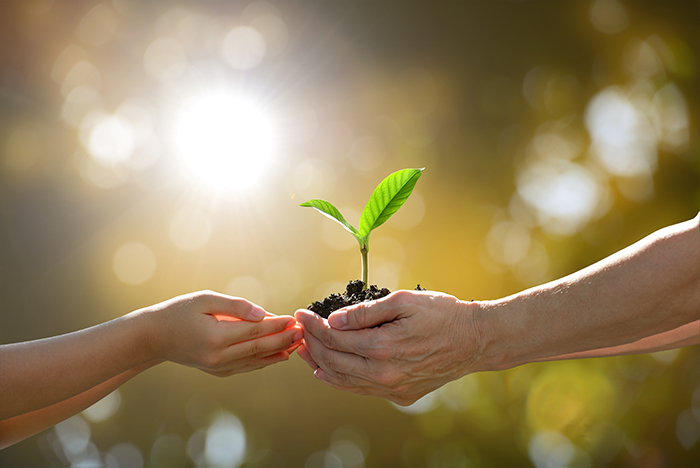 Réaction du comité national de l'environnement et du développement durable au budget du Québec 2019-2020